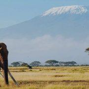 Amboseli-adventures