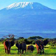 elephants_amboseli