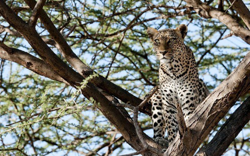 9 days masai mara lake naivasha nakuru samburu amp mt